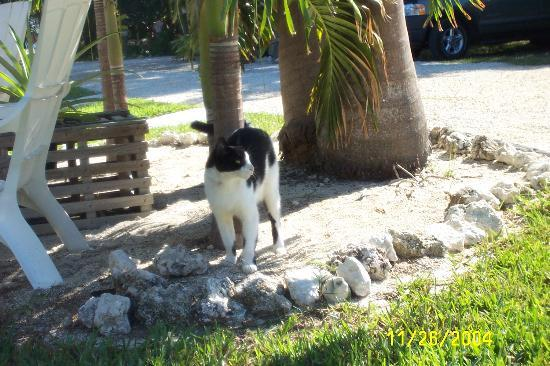 Island Bay Resort: Hanibal - resident cat!!