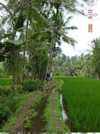 Tegal Sari: trekking through the ricefields