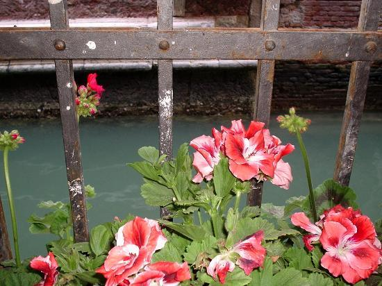 Ca' Satriano: Flower in the box by the bedroom window and canal below
