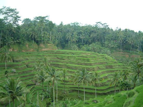 The Oberoi Bali : Bali Rice terrances