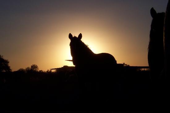 White Stallion Ranch: Sunset