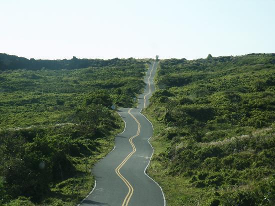 On the Road Past Hana