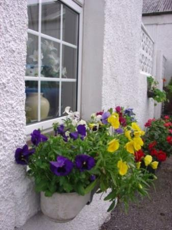 Ariogan Bed & Breakfast: Beautiful flowers