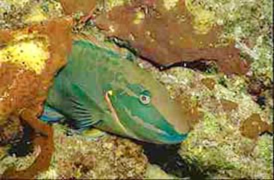 Nylon Pool: Living among the corals