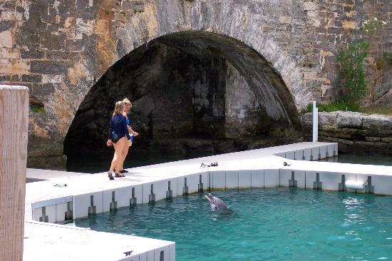 Dolphin Quest Photo