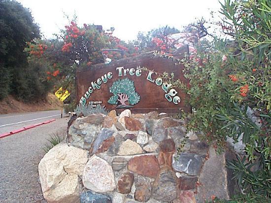Buckeye Tree Lodge: See you again soon!