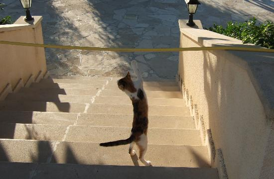 Avanti Hotel: Entertainment cat
