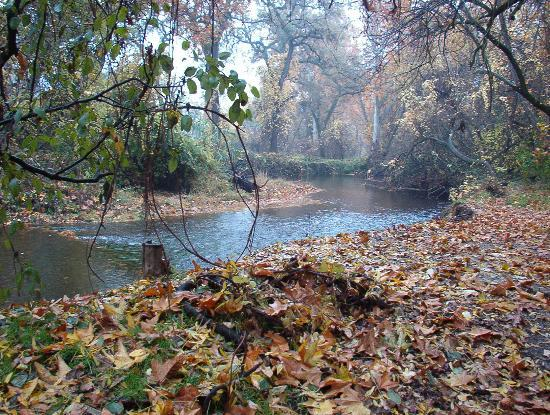 Chico, Californien: Park stream in Winter