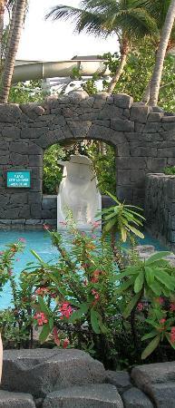 Hyatt Regency Aruba Resort and Casino : The Slide