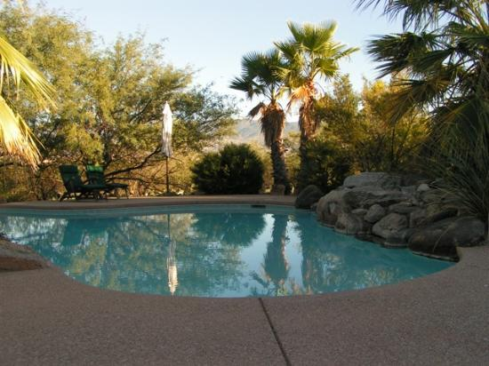 Cactus Cove Bed and Breakfast Inn: Swimming Pool