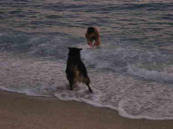 Kleopatra Beach: Deefer my dog on beach