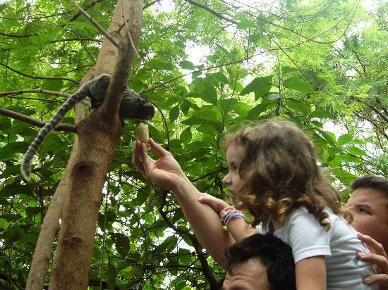 Rio de Janeiro, RJ: Feeding monkeys