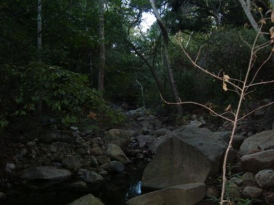 Santa Barbara, Kalifornien: A stream in the forest