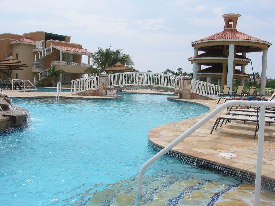 Close up iguana picture of divi village golf and beach resort oranjestad tripadvisor - Divi village golf and beach resort reviews ...