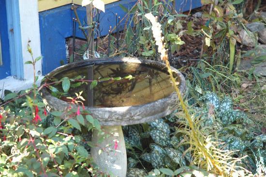 Ashby House Bed & Breakfast: Front garden bird bath