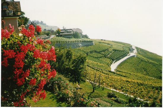 Montreux, Suiza: Vineyards