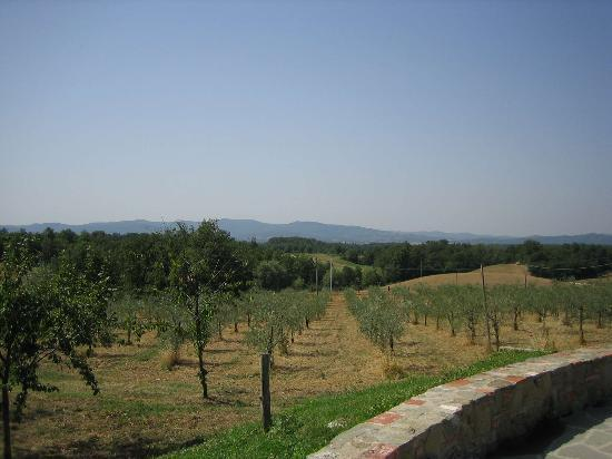 San Giustino Valdarno, Italien: View of the landscape from the swimming pool
