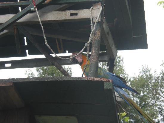 Hacienda del Mar: parrots