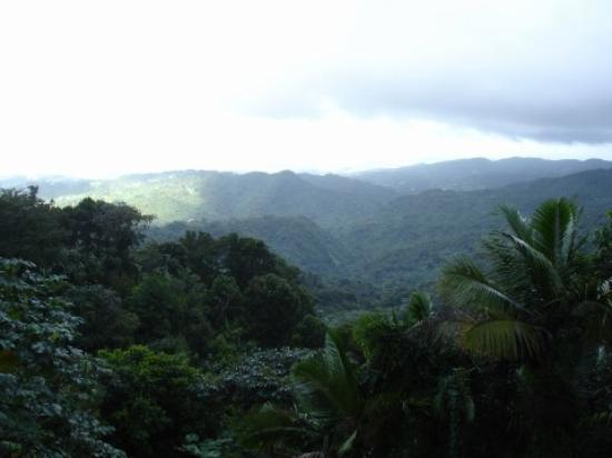 El Yunque National Forest, Puerto Rico: Mist moving over the mountaintops..atop the observation tower