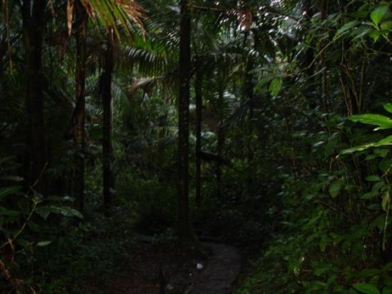 Bosque Nacional El Yunque, Puerto Rico: It's dark, but thats because the foliage is so dense..