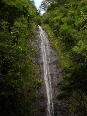 Manoa Falls : the waterfall