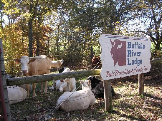 Buffalo River Lodge: Welcome!