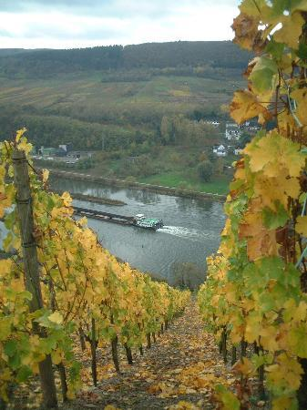 Zell (Mosel), Deutschland: The Mosel River from the vinyards