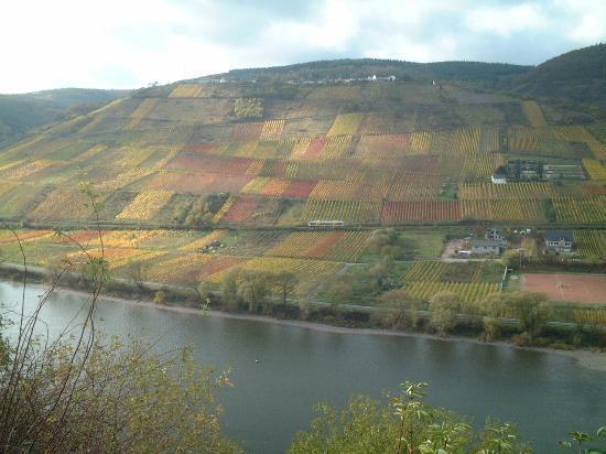 Cafe im Hamm: Mosel vinyards