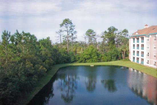 Sheraton Vistana Resort - Lake Buena Vista: Just beyond the tree line you could see Magic Kindom and Epcot