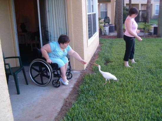 My Kids Feeding The Ducks Outside Our Patio Doors Picture
