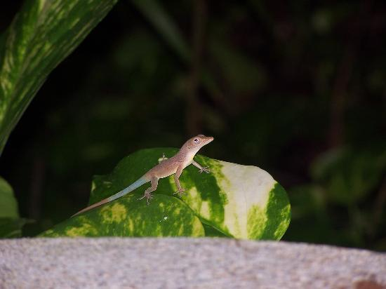 Couples Sans Souci : these little guys are all over!