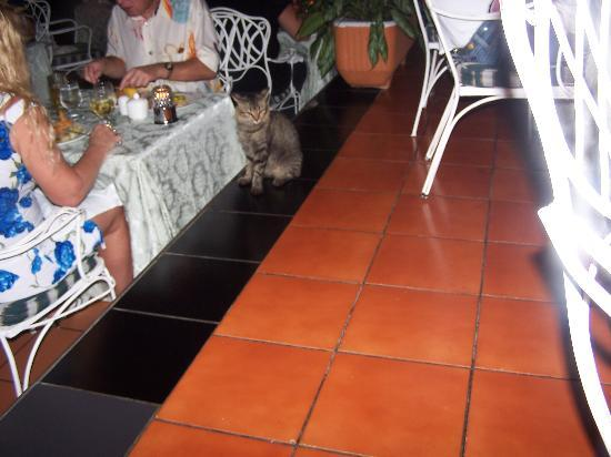 Couples Sans Souci : kitty cat sits by your table every day