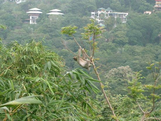 Hotel Costa Verde : Mr. Sloth