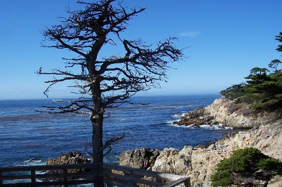 Monterey, Californie : 17 Mile Drive