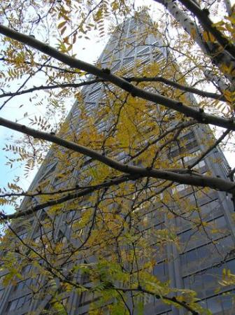 Chicago, IL: Big John, through autumn leaves