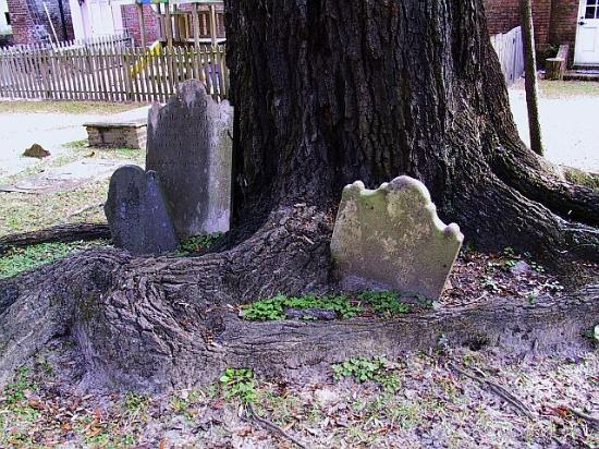 ‪‪Georgetown‬, ساوث كارولينا: Headstones in tree at Prince George Winyah Episcopal Church in Georgetown‬