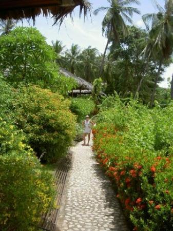 Coral Bay Resort: The gardens