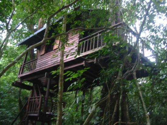 Khao Sok National Park: Treehouse 3, Our Jungle House