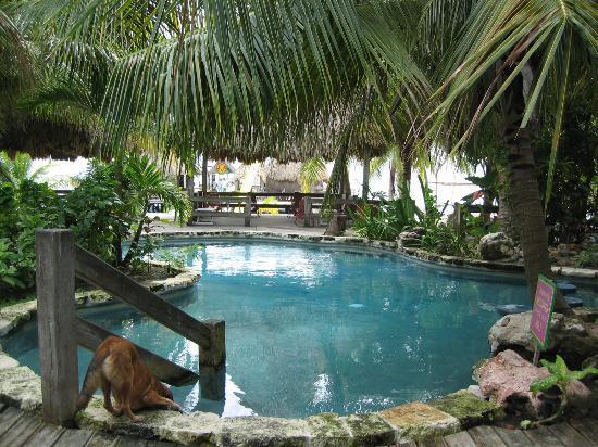 Ramon's Village Resort Photo