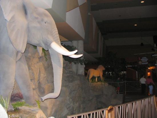 Kalahari Resorts & Conventions: Wild Animals