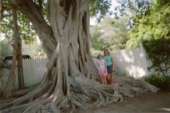 My Sister And I Under A Banyan Tree In Truman Annex June