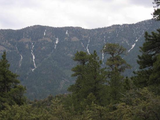 Mount Charleston : Snow on Mt. Charleston