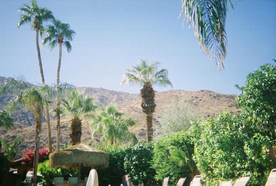 Landscape - The Coyote Inn Photo