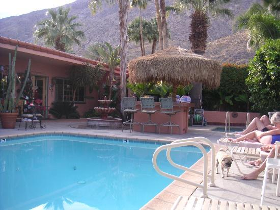 Pool - The Coyote Inn Photo