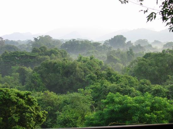 Heritance Kandalama: Early morning jungle mists