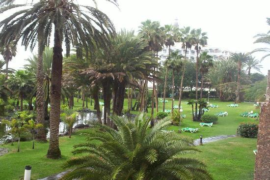 Hotel Riu Palace Oasis: swans and parrotts in the garden