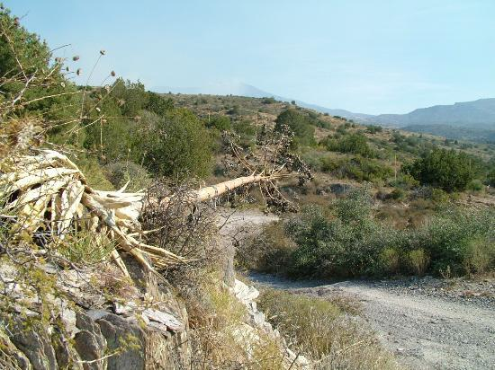 Payson, Αριζόνα: Some intersting rocks and an agave