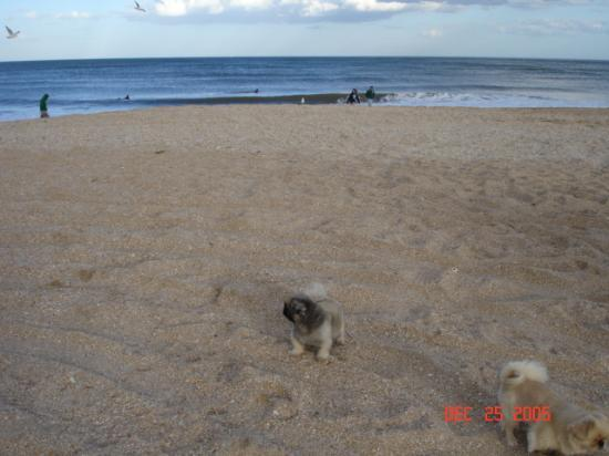 Oceanview Lodge: My dogs on the beach