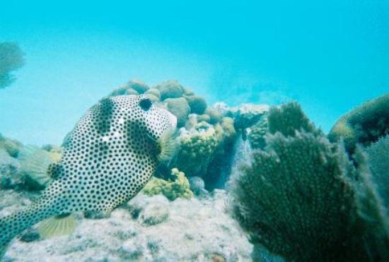 Crystal Cove Beach Resort on Sapphire Bay: snorkeling