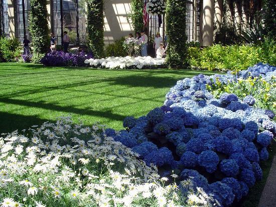 Longwood Gardens: Hydrangea